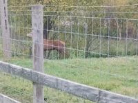 Ferma jeleni Wilczewscy