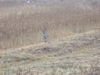 polowanie-na-daniele-036