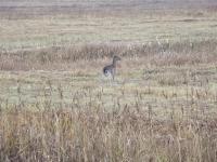 polowanie-na-daniele-038