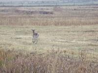 polowanie-na-daniele-040