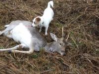 polowanie-na-daniele-047