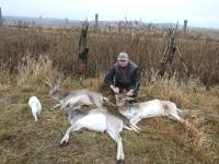 polowanie-na-daniele-051