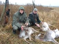 polowanie-na-daniele-055