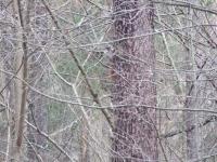 polowanie-wigilijne-022