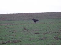 polowanie-wigilijne-008
