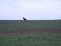 polowanie-wigilijne-010
