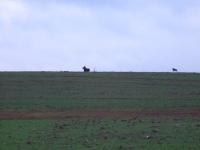 polowanie-wigilijne-011