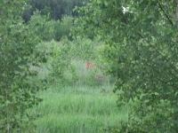 polowanie-na-rogacza-006